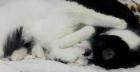 cat-cuddle